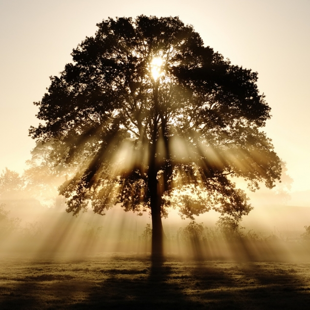 Prayer for Healing the Family Tree | Love Being Catholic