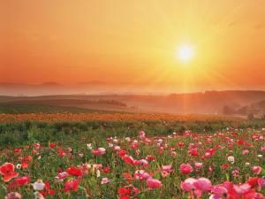Morning flowers sunshine
